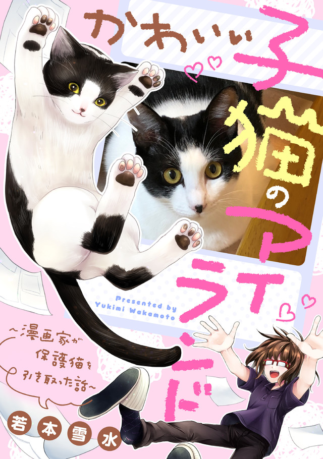 かわいい子猫のアイランド ~漫画家が保護猫を引き取った話~