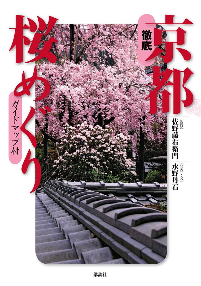 徹底 京都桜めぐり