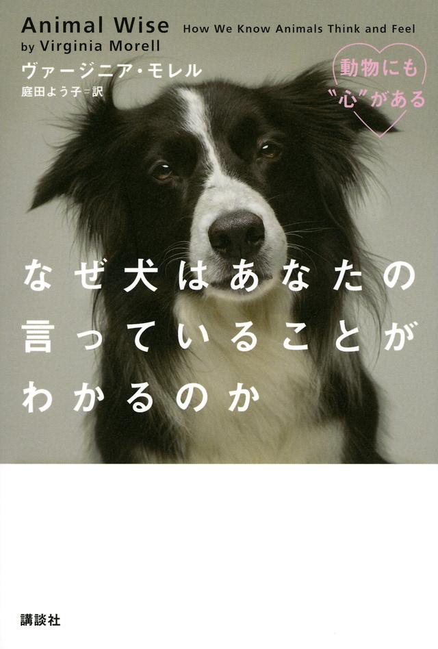 なぜ犬はあなたの言っていることがわかるのか
