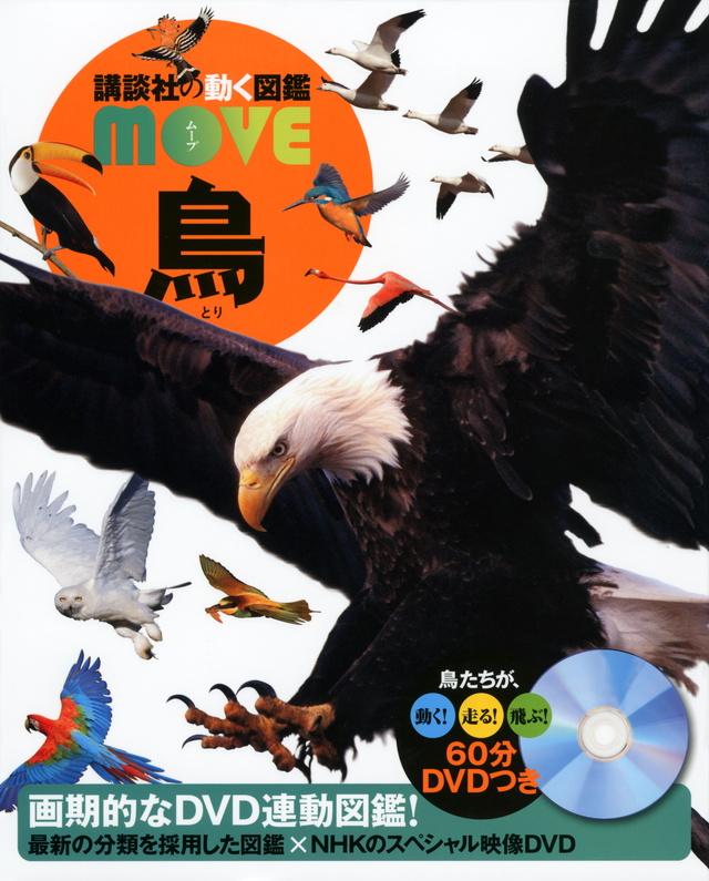 MOVE 鳥