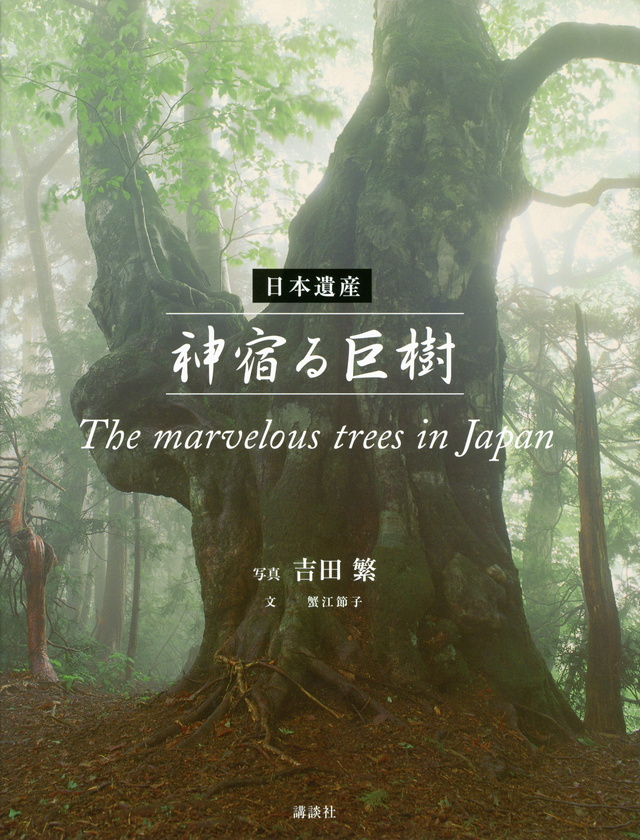 日本遺産 神宿る巨樹 The marvelous trees in Japan