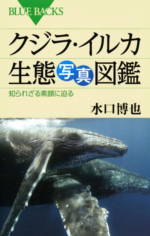 クジラ・イルカ生態写真図鑑