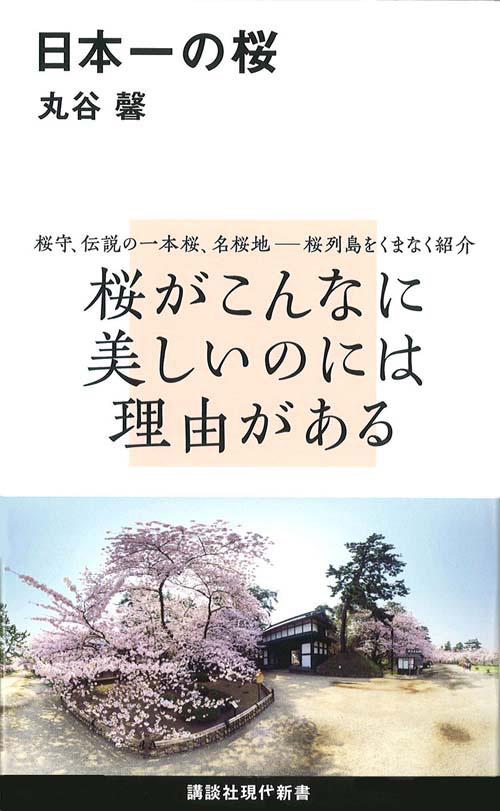 日本一の桜