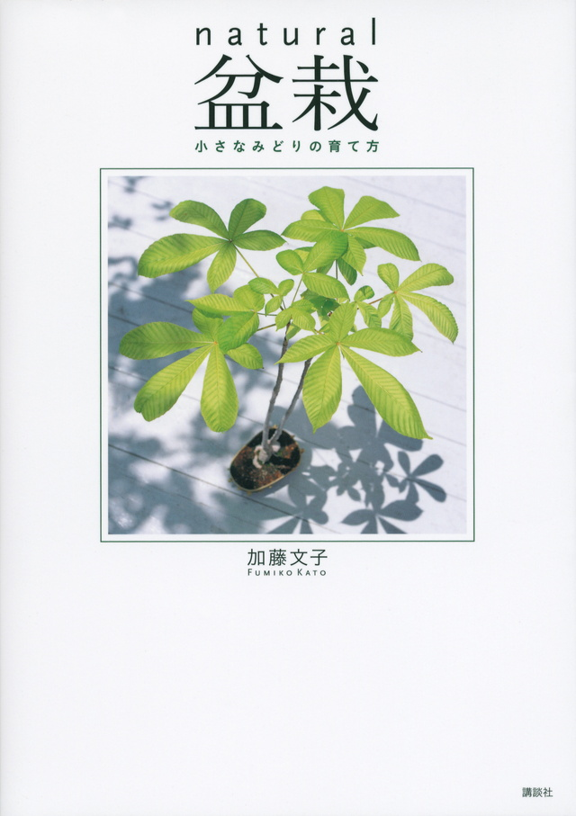 natural盆栽 小さなみどりの育て方