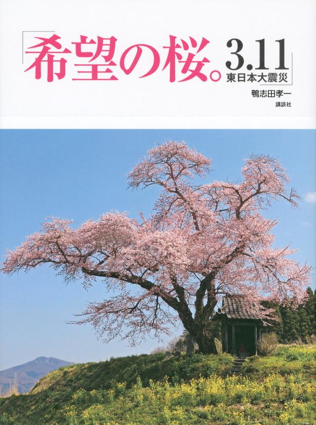 希望の桜。 3.11 東日本大震災