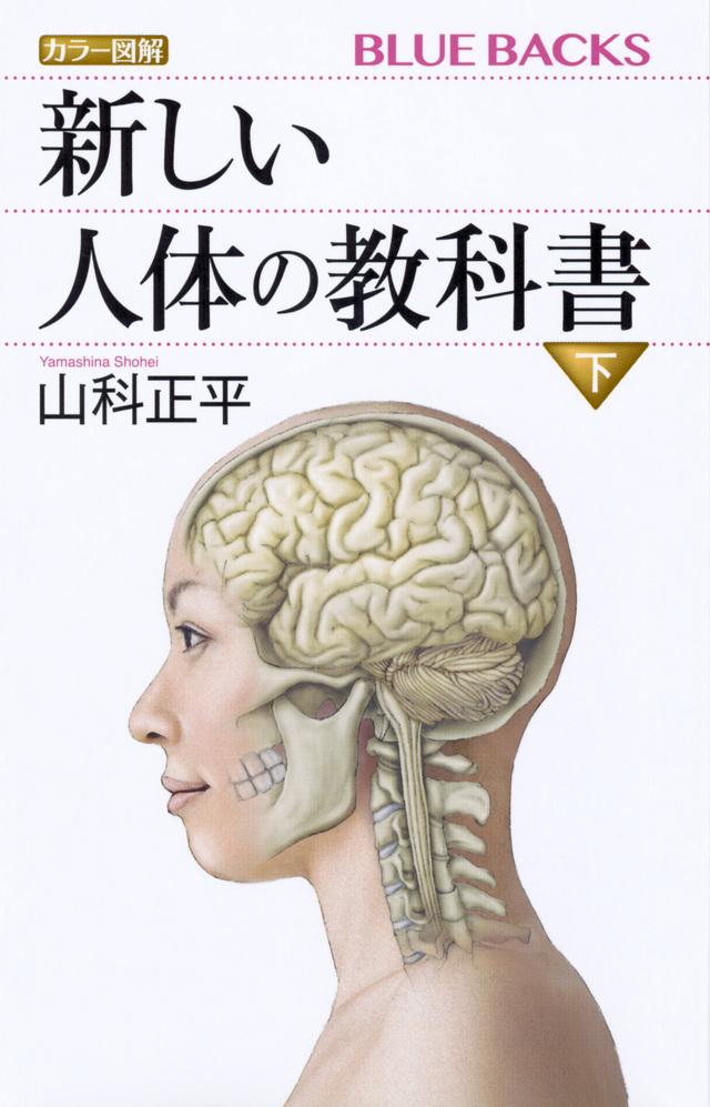 カラー図解 新しい人体の教科書 下