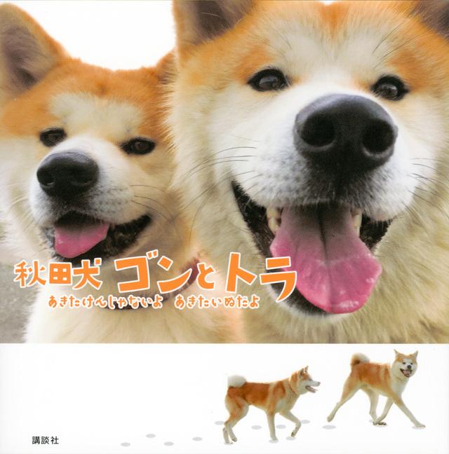 秋田犬 ゴンとトラ あきたけんじゃないよ あきたいぬだよ