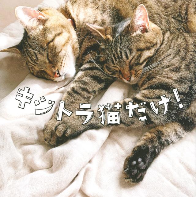 キジトラ猫だけ!